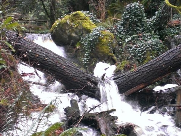 2 Hour Guided Rain Forest Hike in Victoria