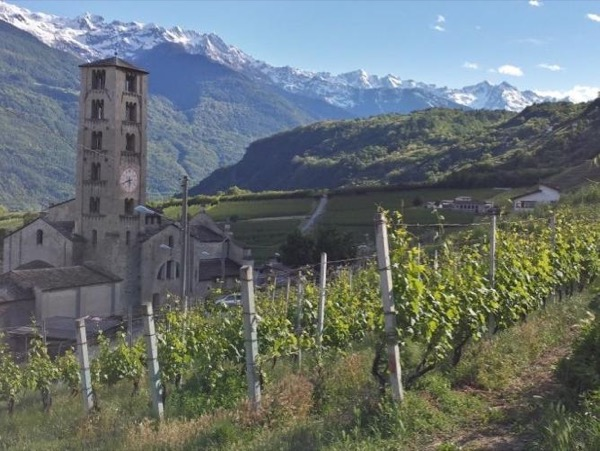 Wine and Food Experience in Valtellina