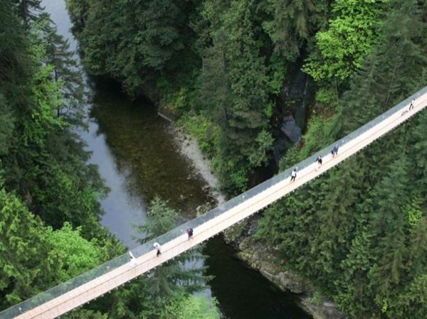 Capilano Canyon and Grouse Mountain: Explore the Rain Forest and Mountains
