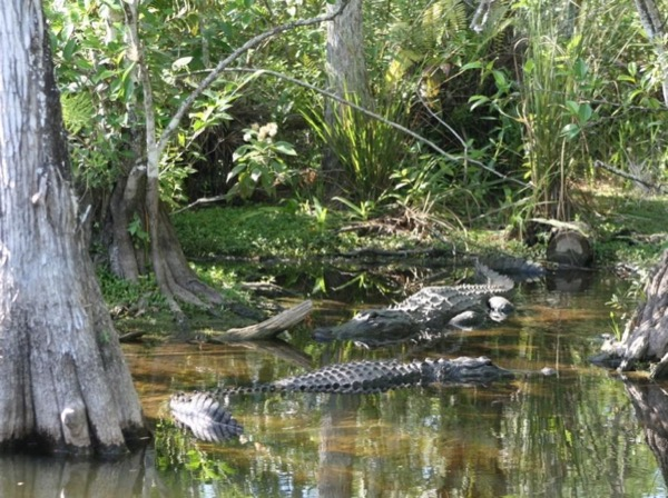 Everglades holiday park in Fort Lauderdale and Miami city tour