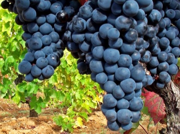 Vineyards of Cauca Valley Private Tour