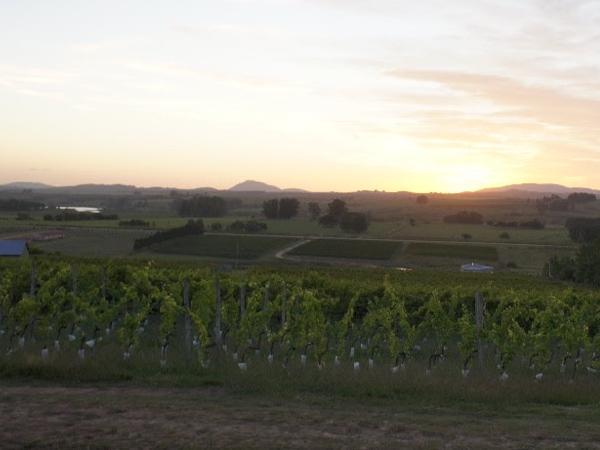 Punta del Este shore excursion = Flex city tour + Wine experience (up to 3 traveller's)