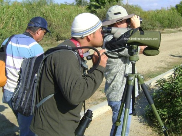 Birding/Bird-watching Cabo 4hrs.