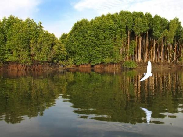 Sungai Merbok Forest Reserve