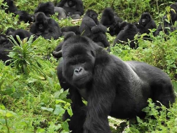 Tracking Mountain Gorillas in Rwanda