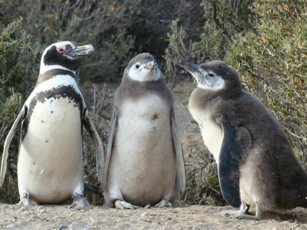 Punta Tombo - Penguin Colony