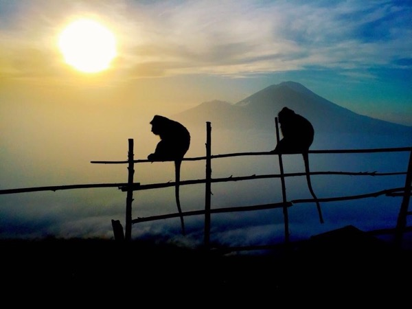 Mount Batur Volcano Sunrise Trekking Private Tour in Bali