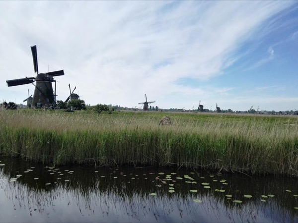 Kinderdijk, Delft & The Hague Private Tour