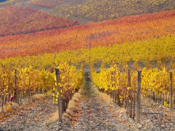 Chianti Wine Tasting Hike