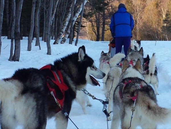 Quebec Winter Dogsledding Fun adventure! Private Tour