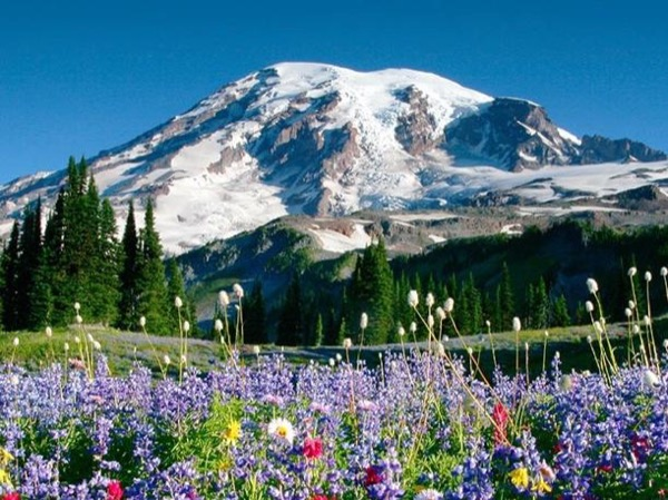 Private Tour to Mount Rainier and Picnic Lunch with WA Wines