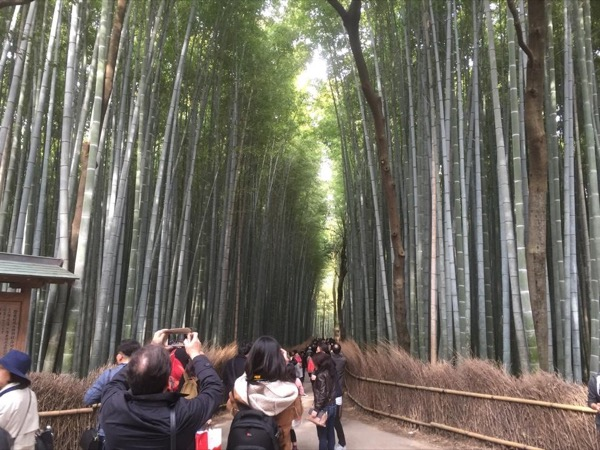 Walking in Kyoto and Tokyo - Amazing Two Days - By A Private Guide -