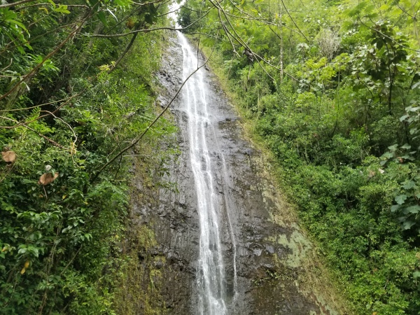 Manoa Rain forest Waterfall Hike on the island of Oahu