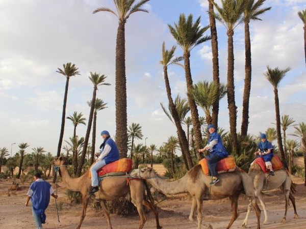 Camel Ride, Tiskiwin African Touareg Museum and The Menara Gardens- With a Licensed Tour Guide