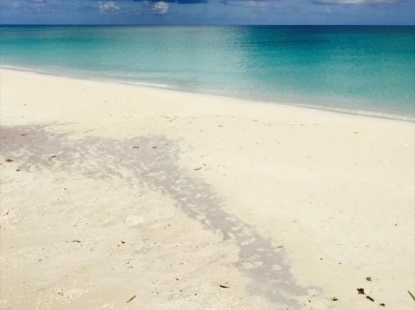 Key Biscayne Island & Seaquarium Trip from Miami
