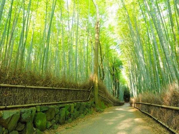 Essential Kyoto private tour