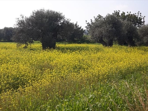 Kyrenia Nature Tour