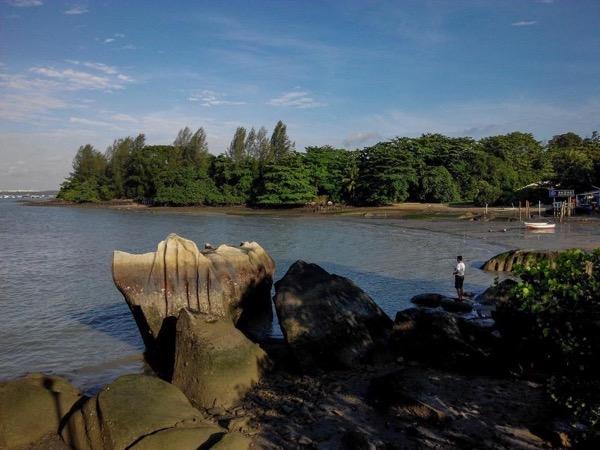 Chek Jawa - Pulau Ubin Nature Tour
