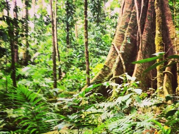 Private Saint Lucia Rain Forest Tour