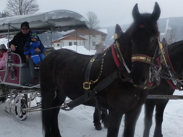Horse-drawn sleigh ride - private tour