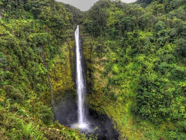 Hilo Waterfalls, Sea cliffs, Rainforest, Lava flows & Kalapana - 11 Passenger Mercedes van back roads tour