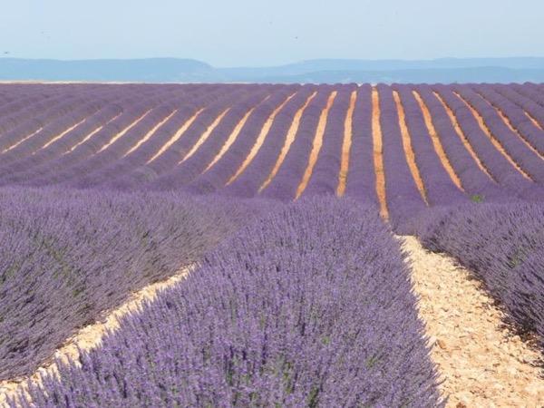 Lavender Road and Aix-en-Provence