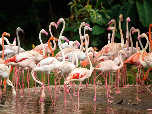 Astonishing bird watching in baru island Cartagena