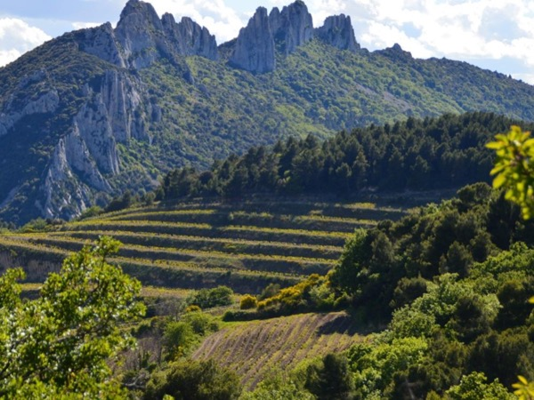 Southern Rhone 5 Hours Private Wine Tour