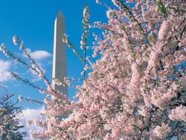 Washington Monuments Tour