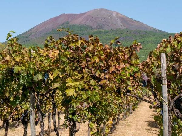 Pompeii - Sorrento and Wine Tasting Private Tour