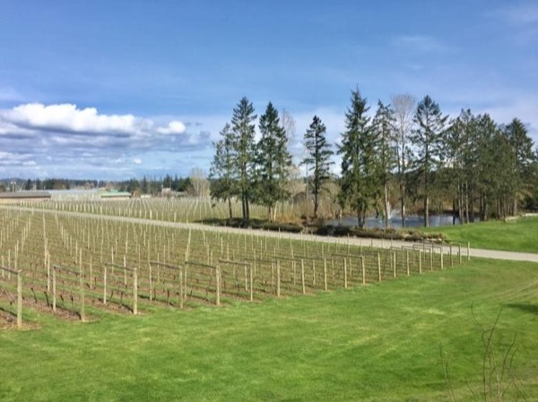 Taste the Peninsula - Winery Tour