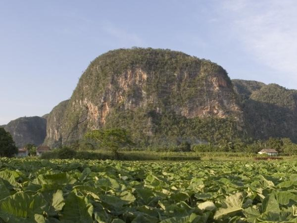 A day trip to the land of cigars: Vinales...