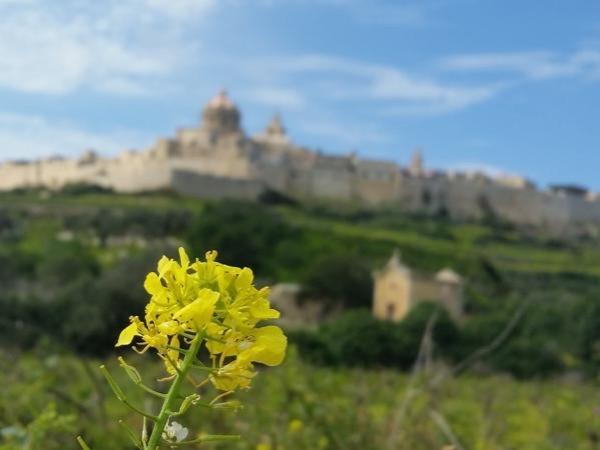 Christian Malta