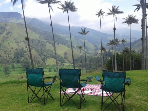Salento, Cocora and the Wax Palm Private Tour