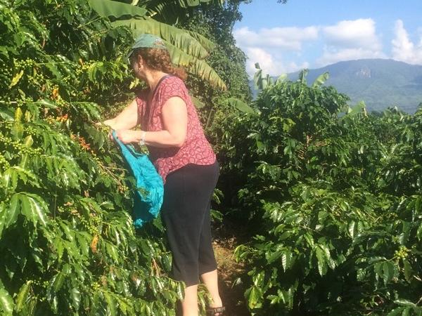 Private Tour around the Colombian Coffee Secrets
