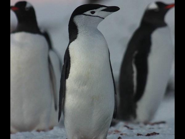 Guide Test Account 1 - Antartica - Testing purposes only - DO NOT BOOK