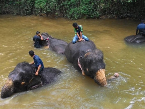 The Magnificent Elephant Encounter (Private Tour) - a day trip from Kuala Lumpur