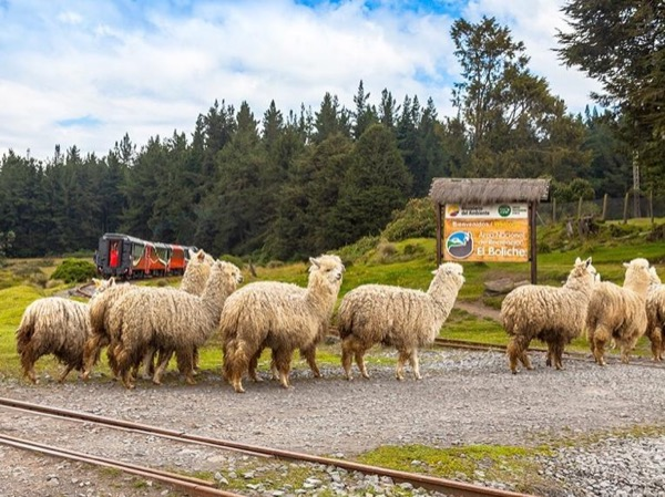 Historic Andes train ride Tour