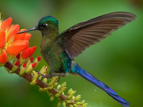 Profusion of hummingbirds and jungle or mountain views