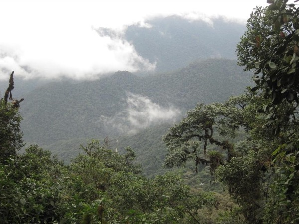 Mindo Cloud Forest - Beautiful One Day Tour