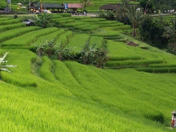 Private World Heritage Rice Terrace Tour