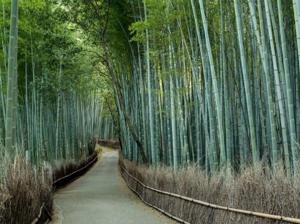 Gardens and Bamboo Grove - Private tour