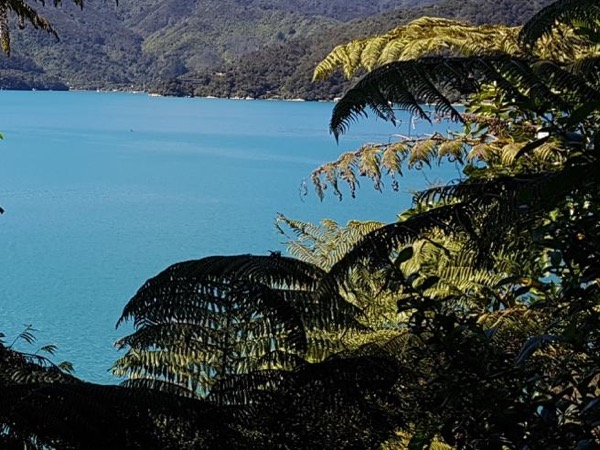 Personal Walking Blenheim Havelock Picton Queen Charlotte Drive