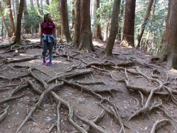 Hiking tour in Kyoto with a guide/photographer