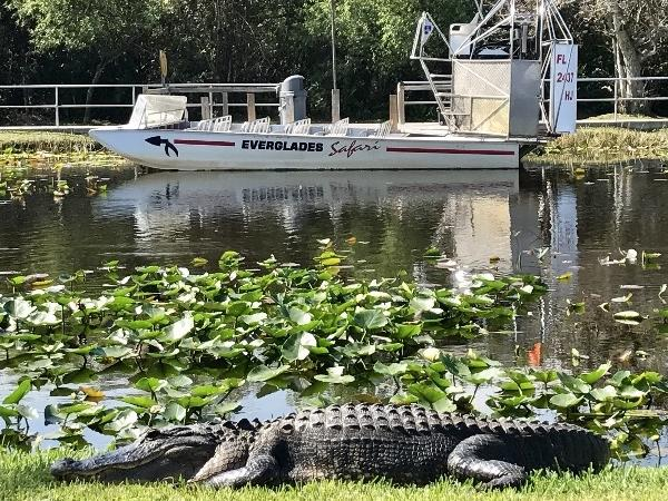 Everglades Tour like You've Never Seen Before