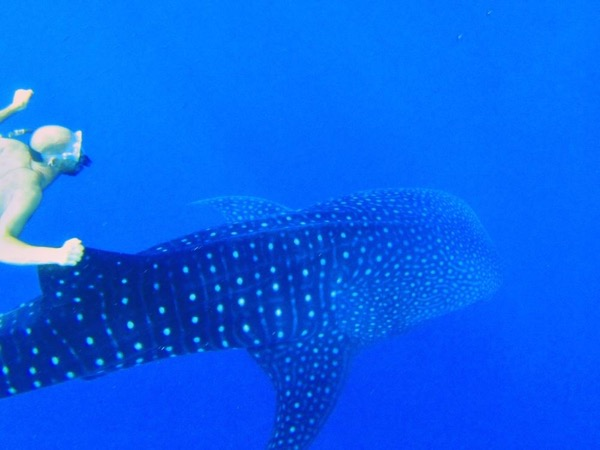 Private Swim with Whaleshark Tour