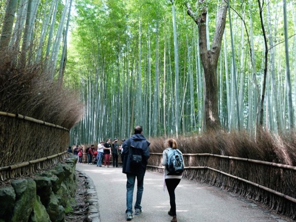 Kyoto Highlights! (Half Day Tour)