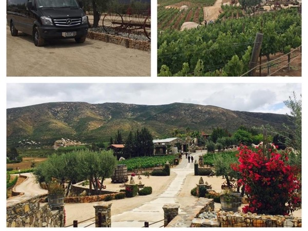Private Tour to the Wine Country In Baja California from Tijuana