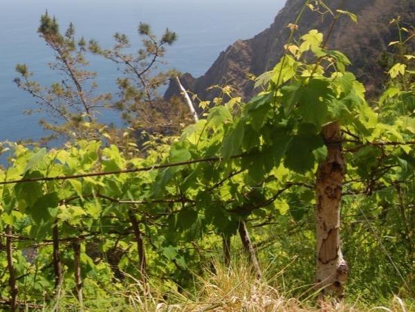 Madeira Shine & Wine