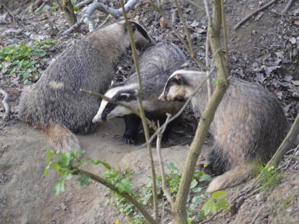 Private wildlife tour Poland